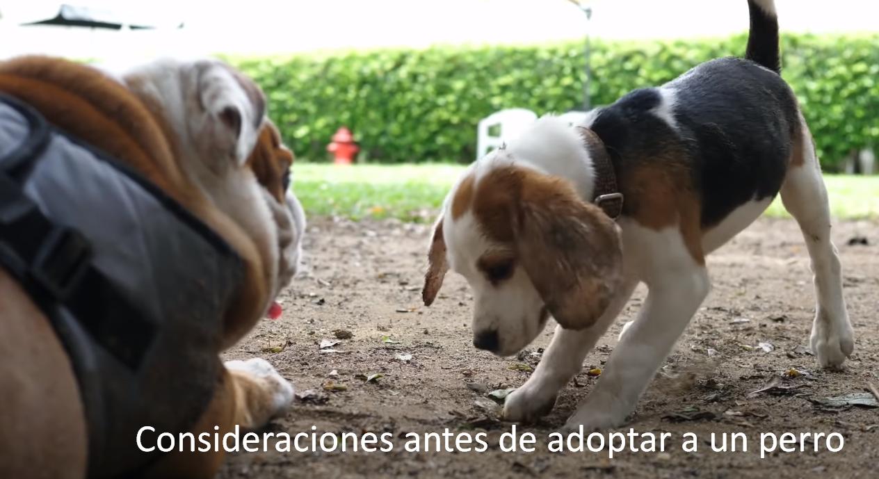 Consideraciones antes de adoptar a un perro dentro de los Estados Unidos de América