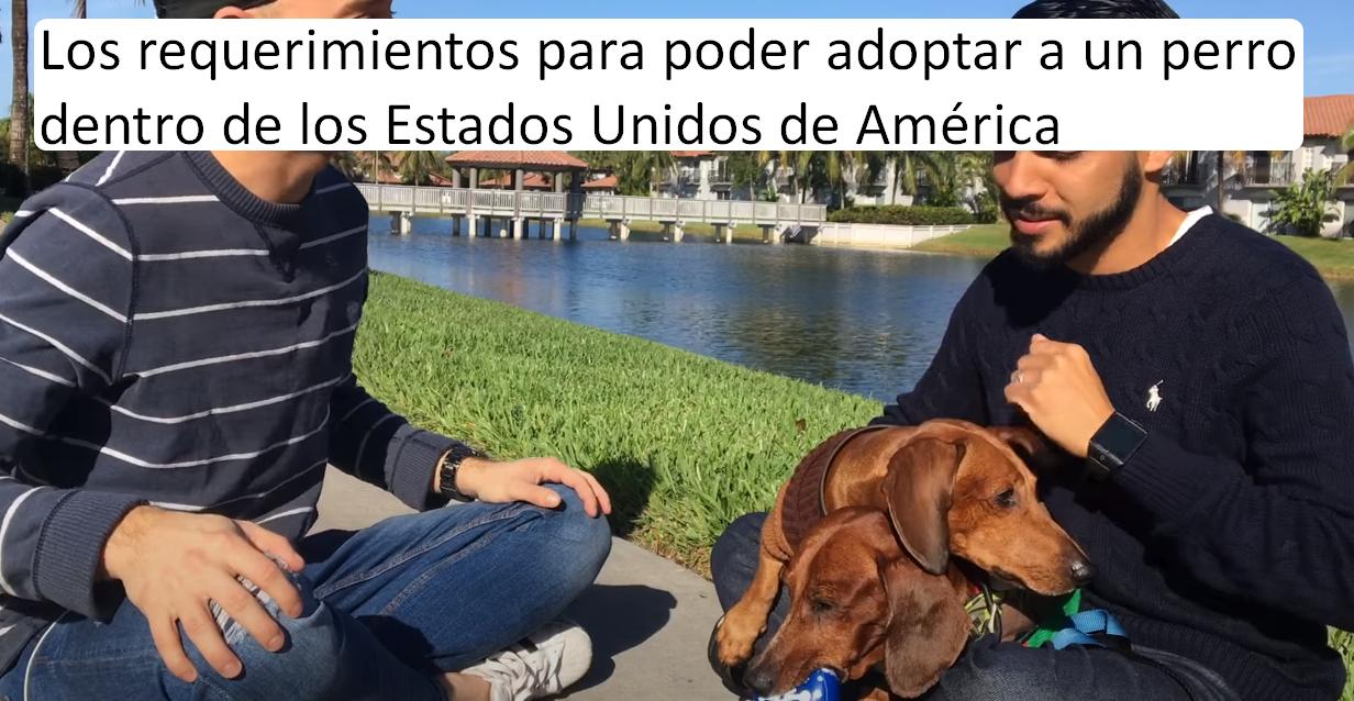 Los requerimientos para poder adoptar a un perro dentro de los Estados Unidos de América