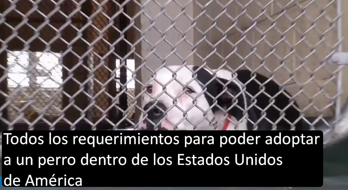 Todos los requerimientos para poder adoptar a un perro dentro de los Estados Unidos de América